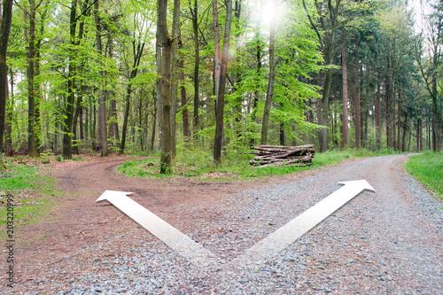 Fotografija  Weggabelung im Wald für eine Richtung entscheiden.