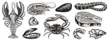 Crustaceans, Shrimp, Lobster O...