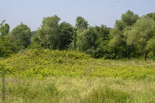 Fototapeta Bahçeler ve ormanlar obraz