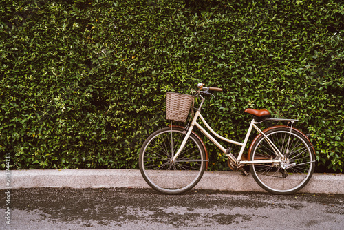 Aluminium Prints Bicycle Old brown bicycle on the street, tree wall background on the road and tree is colorless.