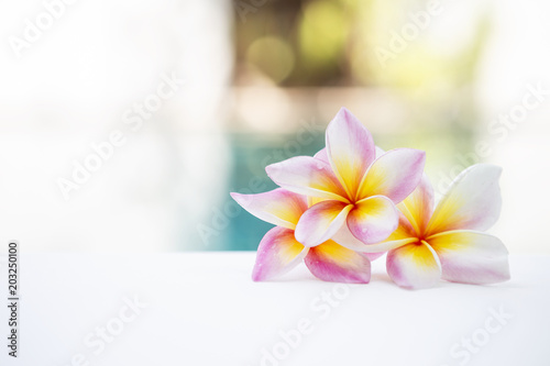 Foto op Canvas Frangipani Beautiful fresh colorful Plumeria flower over blurred garden, outdoor day light