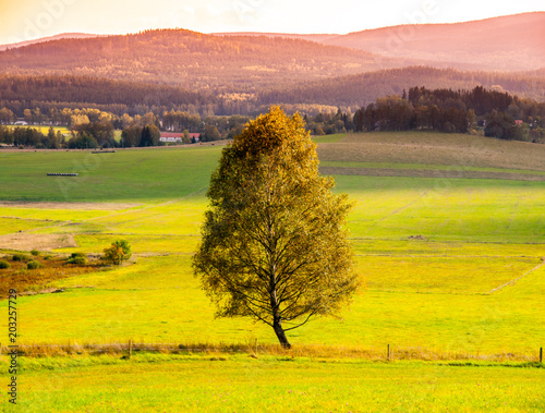 Landscape of Sumava with lonesome tree in the middle of meadow, Czech Republic.