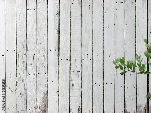 Fotografie, Obraz  textura de pared de madera