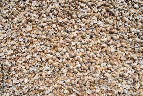Fotografia, Obraz  Small clamshells