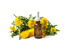 Dandelion Flowers And Essential Oil Isolated