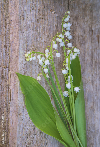 Poster Lelietje van dalen Bit of lilies of the valley on tree stump, selective focus,vertical picture