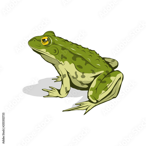 Vector frog logo. Frog Sketch. Vector artwork. Canvas-taulu