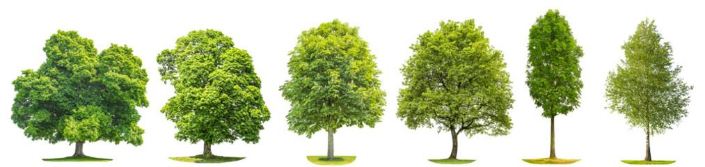 Kolekcja drzew brzoza klon dąb kasztan Pojedyncze obiekty przyrody