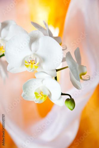 Aluminium Prints Orchid Orchidee, Muttertag, Geburtstag, schön, Stillleben