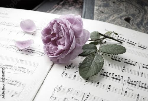 Fotografie, Tablou  Alte Musiknoten mit erblühter Rose (Rosaceae), Liebeskummer, Trauer, Tod