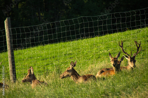 Fotobehang Ree Natur, Sommer, salzburg, Heuberg, friedlich