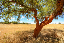 Hilly Alentejo Landscape With ...