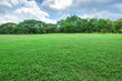 canvas print picture - Beautiful landscape in park with green grass field.