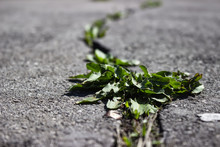 The Grass In The Pavement