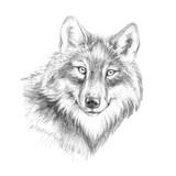 Naszkicuj głowę grafika wilka z czarno-białych grafik pióra - 203354112