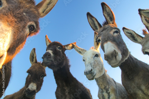 Montage in der Fensternische Esel Group of funny donkeys