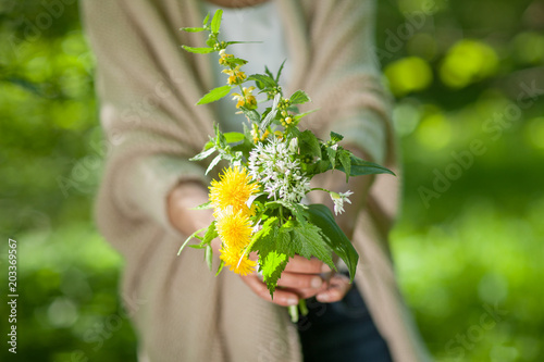 Fotografía  Beautiful woman hands holding wild herbs in the forest, can be used as backgroun