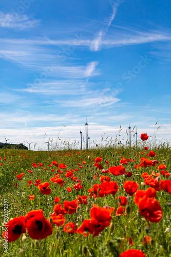 Plakat piękne pole z wieloma makami, w tle są turbiny wiatrowe