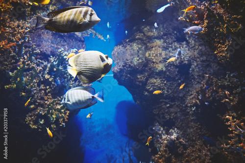 View under water of colored sea fishes inhabiting the Mediterranean Sea Malta aquarium