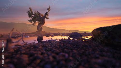 Obraz na płótnie Samotne drzewo na pustyni