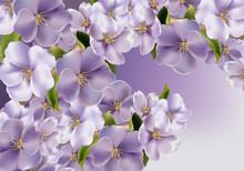 Violet Flowers Background Vect...