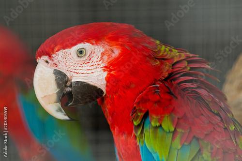 Foto op Aluminium Papegaai parrot, bird, macaw