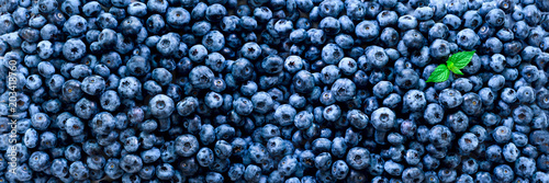Fototapeta Fresh blueberries background with copy space for your text. Border design. Vegan and vegetarian concept. Macro texture of blueberry berries. Summer healthy food. Banner obraz