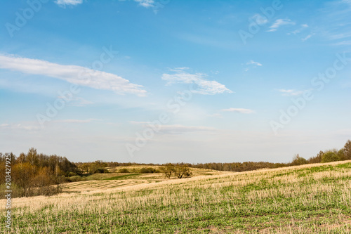 Poster Blauw field after harvest, cut off stalks of cereals and sprouting green grass, blue sky with small clouds, spring time