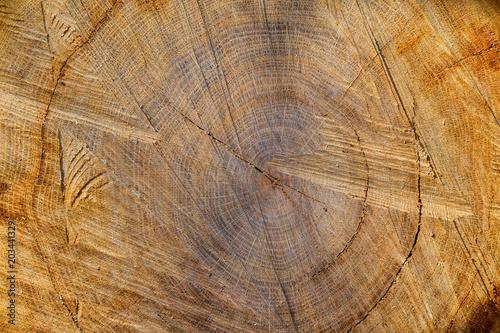 Timber texture. #203441329
