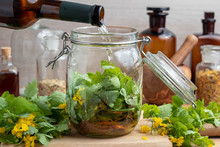Preparation Of Homemade Liver Tonic By Pouring Wine Over Greater Celandine Leaves And Roots