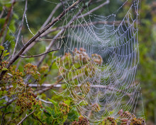 Beautiful Web On The Bush In The Summer Morning