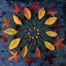 Autumn Leaves In Mandala Shape Flat Lay On Dark Background. Natural Meditative Technic For Calm Down