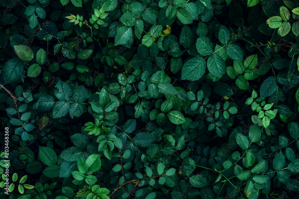 Fototapety, obrazy: Green plant leaves background, top view. Nature spring concept
