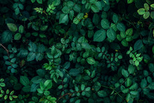 Green Plant Leaves Background, Top View. Nature Spring Concept
