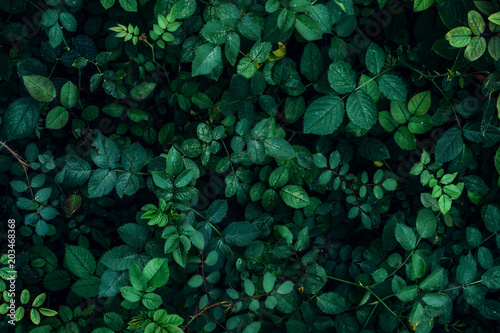 Fotoposter Planten Green plant leaves background, top view. Nature spring concept