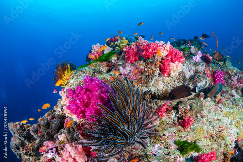 Valokuvatapetti Beautiful, colorful tropical coral reef in asia