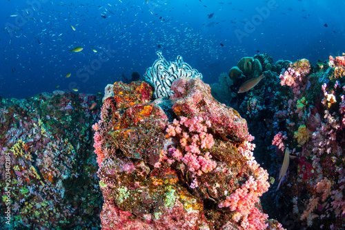 Papiers peints Recifs coralliens Beautiful, healthy tropical coral reef with colorful soft corals