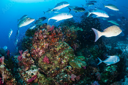 Poster Coral reefs Bluefin Trevally and Emperor hunting on a tropical coral reef