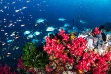 Tropical Fish Swimming Around ...