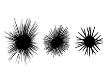 Set Of Sea Urchin Icon In Silhouette Style, Vector