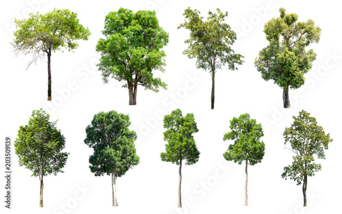 Photo  Isolated Trees on white background, Collection of trees.