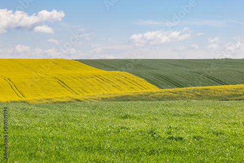 Tuinposter Blauwe hemel A Sussex farm landscape with a vivid yellow canola/rapeseed field