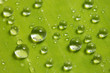drop water on green leaf
