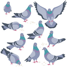 Set Of Gray Doves In Motion