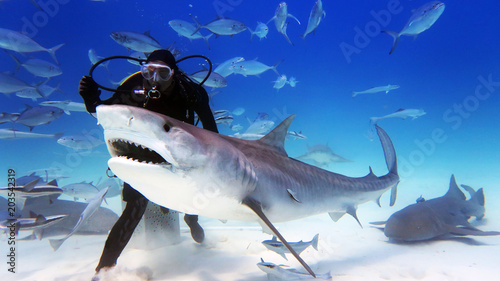 Portrait of a diver giving food to a shark Wallpaper Mural