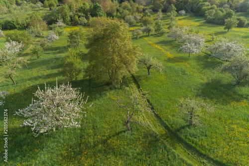 Foto op Canvas Groene Luftaufnahme blühende Streuobstwiesen im Frühling
