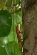 Lizard on a tree.