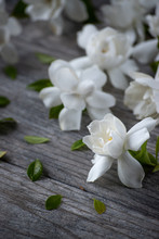 Gardenia Blossoms On Old Gray ...