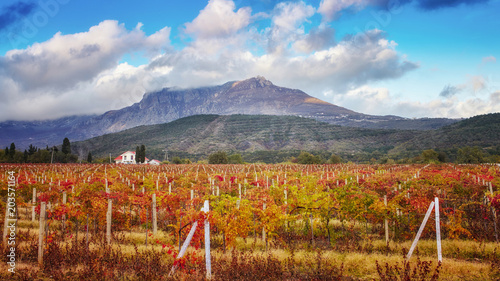 Foto op Canvas Donkergrijs vineyards in autumn colors