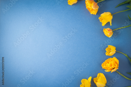 Keuken foto achterwand Bloemen yellow tulips on a blue background Spring, summer concept. Top view Flat lay